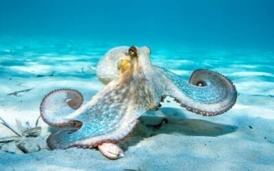 Octopuses Punch Fish in Spite